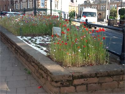 The wildflower border created by the Royal British Legion in Penrith town centre
