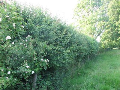 Mixed hedge