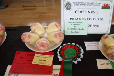 Prize winning potatoes at the NVS Welsh Show