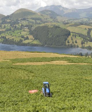 Bracken cutting above Ullswater