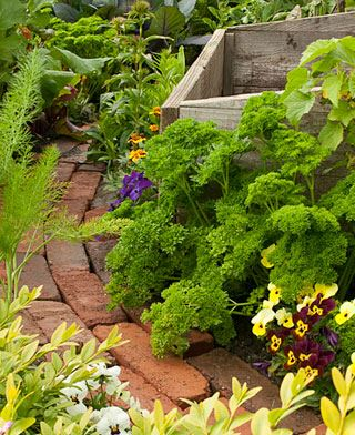 Flower beds and edge planting